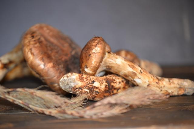オーガニック農業100%を目指すブータン王国。幸福の国で出会った、国産を凌ぐほどの香り高い松茸を日本にも広めたい。