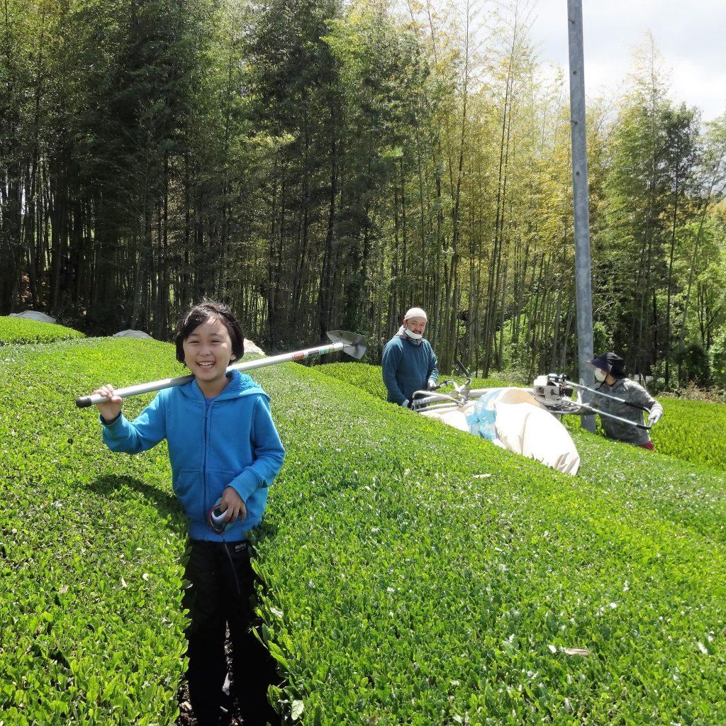無農薬・除草剤不使用の京都のお茶ができるまでのストーリー