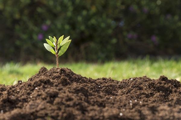 放置された農地を、オーガニック新規就農者に有効活用してほしいという思いでキクイモ栽培を始めた。