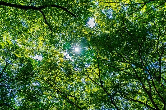 「使うだけで森づくりに参加できる」という、森から生まれた真のオーガニック・コスメとは?