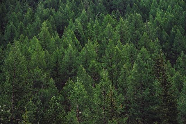 眠れない現代人のため、増え過ぎた杉を有効活用したい!|眠りに有用な成分をもつ杉の驚異的な力とは?