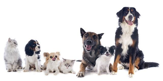「犬や猫にも人間と同等に安心安全なものを食べさせたい」私がオーガニックペットフードを作った理由